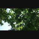 木陰・間に覗くおひさま