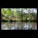 背景映像「池と森林」