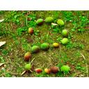 落ちていた梅の実で数字2