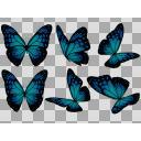 蝶の画像詰め合わせ