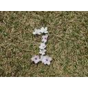散った桜で数字1