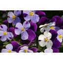 春の花壇3