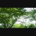 木の間から降り注ぐ光【4K UltraHD】