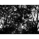 モノクロの森的なサムシング。